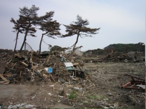 被災地に懸命立つ3本の木